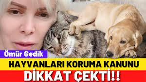 Hayvanları Koruma Kanunu TBMM'den geçt! Ömür Gedik o ayrıntıyı dile  getirdi! - YouTube