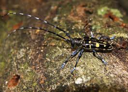 Eight European Countries Fight Against The Asian Longhorned Beetle
