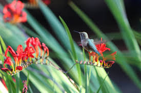 hummingbird garden. Wonderful Garden In Hummingbird Garden G