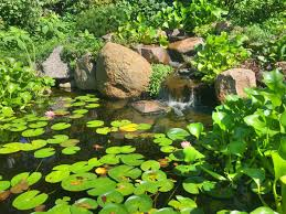 the 5 types of pond plants and which