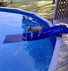 pool ramp for dog doggy docks doggy docks ramps for dogs dog ramps for boats dog pool ramp pool noodle dog ramp