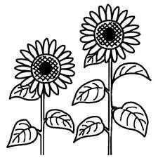 ヒマワリ向日葵2夏の花無料白黒イラスト素材