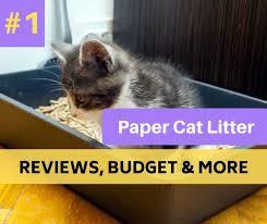 Cat Litter Comparison Chart Best Pellet Paper Cat Litter Reviews In 2019 Catthink