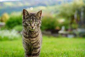 Vaccinating your Cat | The Healthy Pet Club