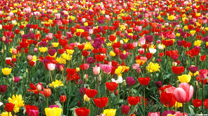 Image result for images of flower garden