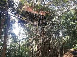 luxury tree house resort. Vythiri Resort: Luxury Tree House Resort R