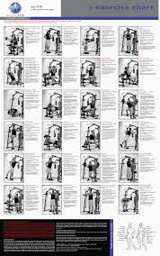 Multi Gym Exercise Chart 80 Symbolic Weider Ultimate Body Works Exercise Chart Download