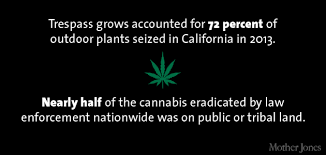 mind blowing facts about marijuana production in america trespass grows