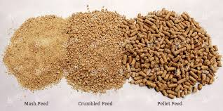 What Is Compound Feed?