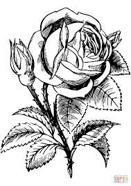 Disegno Di Rosa Da Colorare Disegni Da Colorare E Stampare Gratis