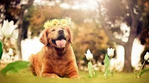 Free download Dogs Desktop Backgrounds ...