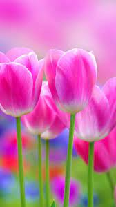 Full Hd Flowers Wallpapers ...