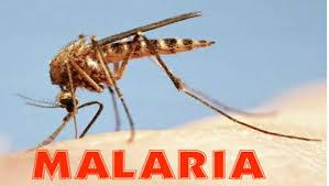 Lampung Masih Endemis Malaria, Kampanye Dinas Kesehatan Menuju Desa Bebas  Malaria Jangan Cuma Jargon   WARTA9.COM
