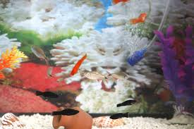 Fun Fish Tank Decorations How To Make A 5 Gallon Aquarium Interesting With Pictures