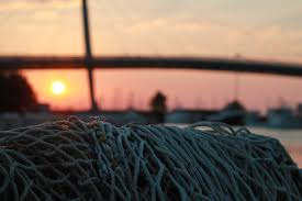 Image result for net fishing