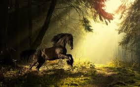 Best 56 Dark Horse Desktop Backgrounds On Hipwallpaper