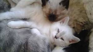 Petition · Polly Lawrence: Every fur baby counts · Change.org