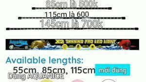 cá chất cùng Aquanice pro led đèn rẻ... - AquaNice Việt Nam
