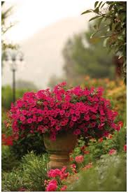 huge flower pots for outside beautiful 97 best container garden recipes images