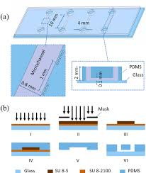 Channel Dimension Chart A Dimensions Of Microfluidic Devices For Vsmc Culture