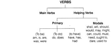 Cbse Class 8 English Grammar Verb Cbse Tuts