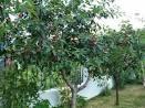 Дерево вишня поделки