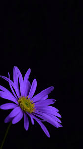 Iphone 7 Purple Flower Wallpaper