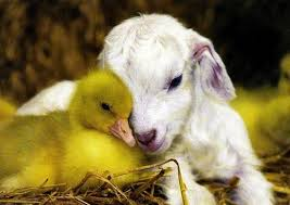 Image result for animals funny hugging