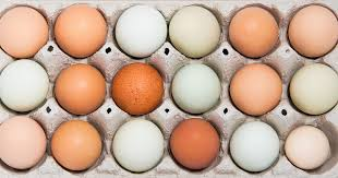 Egg Shell Colour Chart By Breed Of Hen The Poultry Pages