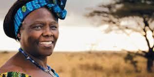 Wangari Maathai, prix Nobel de la Paix en 2004, première femme africaine à  recevoir cette récompense - afriquefemme.com