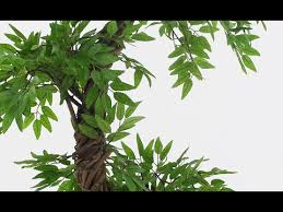 <b>Quality</b> Artificial <b>Japanese</b> Fruticosa Tree by Vert Lifestyle Vogue ...