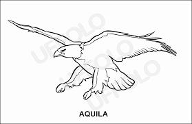 Trova 20 Aquila Disegno Per Bambini Aestelzer Photography