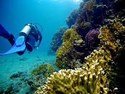 coral reef essay coral reef essay your sunscreen might be killing coral reefs in our coral reef essay your sunscreen might be killing coral reefs in our