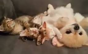 cute kittens and puppies cuddling. Beautiful Cute Daily Cute Three Kittens And A Fluffy Puppy Cuddling Throughout Cute And Puppies T