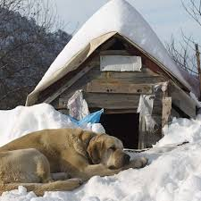 outdoor dog houses winter ideas
