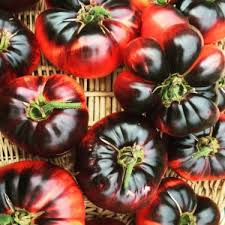 tomaten saatgut