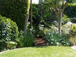 Small Picture nz tropical garden native Google Search Garden Pinterest
