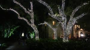 Miami Christmas Lights Tour Things To Do With Kids In Miami For Christmas And The