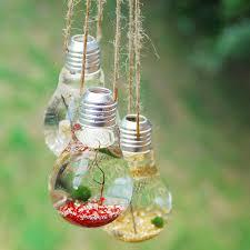 hanging lightbulb marimo moss ball terrarium
