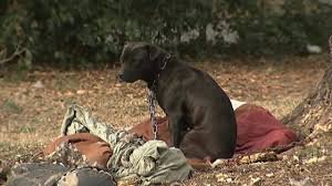 Calls To Police Increase For Pets Left Outside In Cold Wsoc Tv