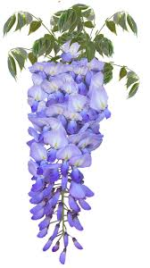Image result for art nouveau wisteria