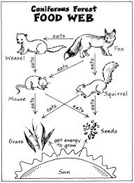 3ea64b13e74704f819fe410d95926e1a science biology life science 25 best ideas about food webs on pinterest food chain on food web worksheet pdf
