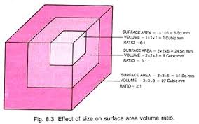 essay on cell effect of size on surface area volume ratio
