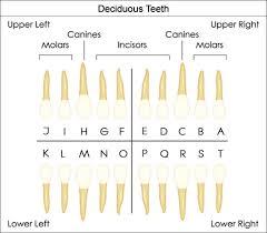 dental charting systems 24 best dental assisting images on pinterest dental anatomy
