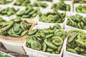 Our Guide to Fiddleheads: What are Fiddlehead Ferns? | First Choice
