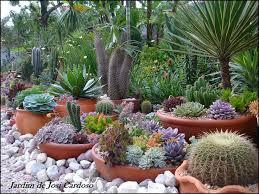 41 Best Delicious Succulents Images On Pinterest  Succulents Succulent Container Garden Plans