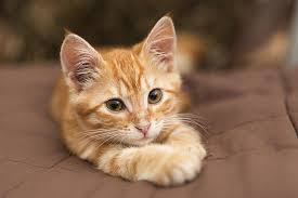 Image result for kitten free photo