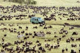Αποτέλεσμα εικόνας για oscars 2018 gifts safari