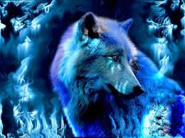blue wolf background.  Wolf Blue Wolf Inside Background P