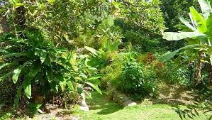 Small Picture How to Make a Tropical Garden Design 1001 Gardens